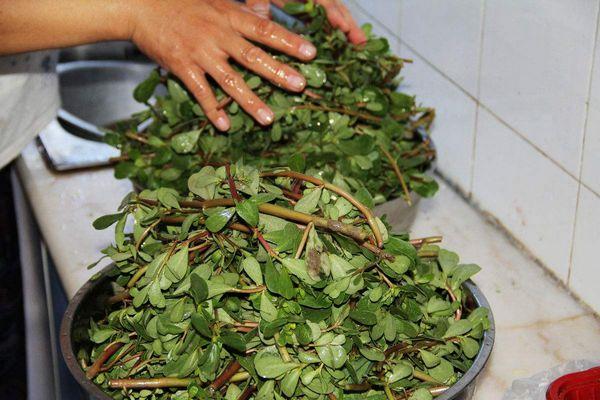 马齿苋薏仁茶——芡实10g,薏仁10g,赤小豆10g,马齿苋10g,淡竹叶3g图片