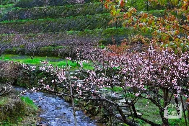 """湖南这片绝美丹霞之地,春天的时候就成了""""花花世界""""!图片"""