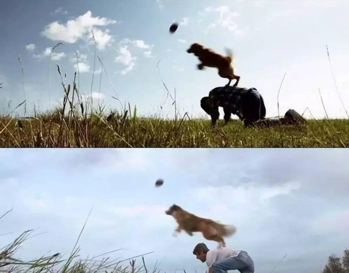 狗的视角展开叙述:它经历一次又一次的重生遇见不同的主人并在轮回
