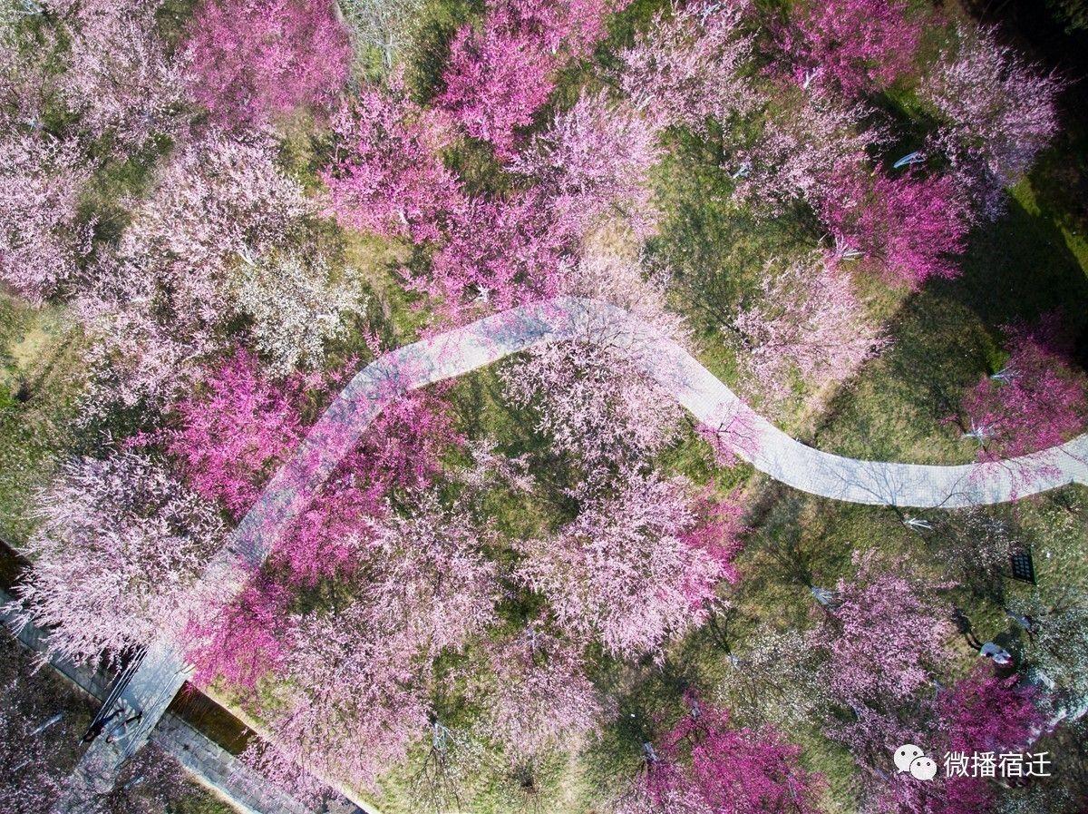 春天来了,诗意行走在宿迁最美的路!