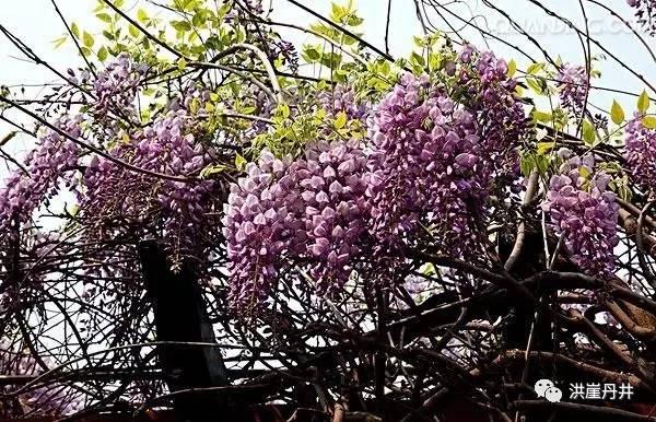 小蜜蜂提着篮子在花丛中高兴地飞来飞去图片