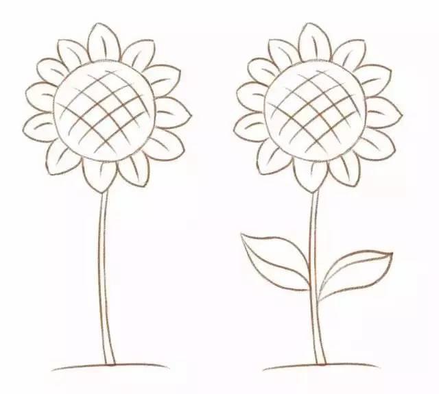 简笔画 常见的花朵画法请收好