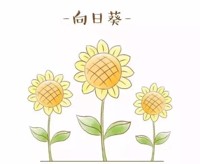 简笔画 | 常见的花朵画法请收好