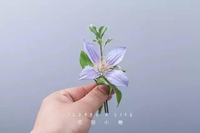 春日小清新 | 迷你襟花图片