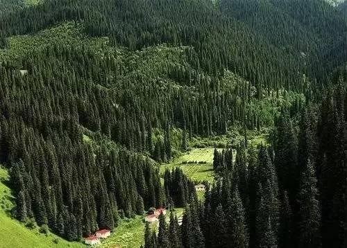 林��i����9�b9i#�f�:#m_中国最美的十大森林,你最想去哪一个?