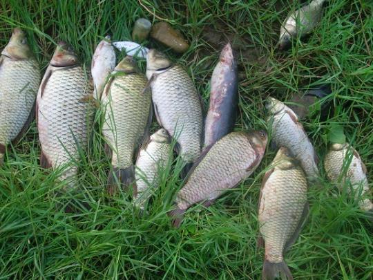 知道这种钓鱼方法,还怕钓不到鱼吗?