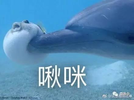 这一次它被海豚撞上,网友们笑到不能自持,小编喊你来收表情包图片