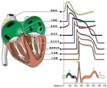 6.心电图胸导联位置