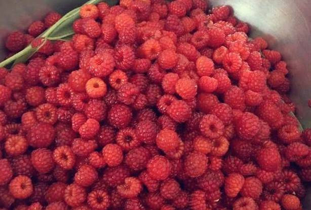 草莓籽_干货 ▏反正我只认识草莓和蓝莓!