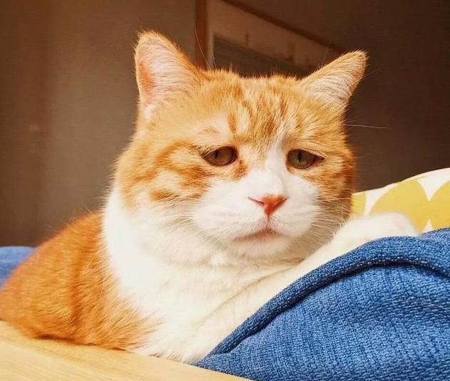 猫咪委屈的表情,惹得网友好心疼,网友觉得,再给它找个女朋友,不然这样图片