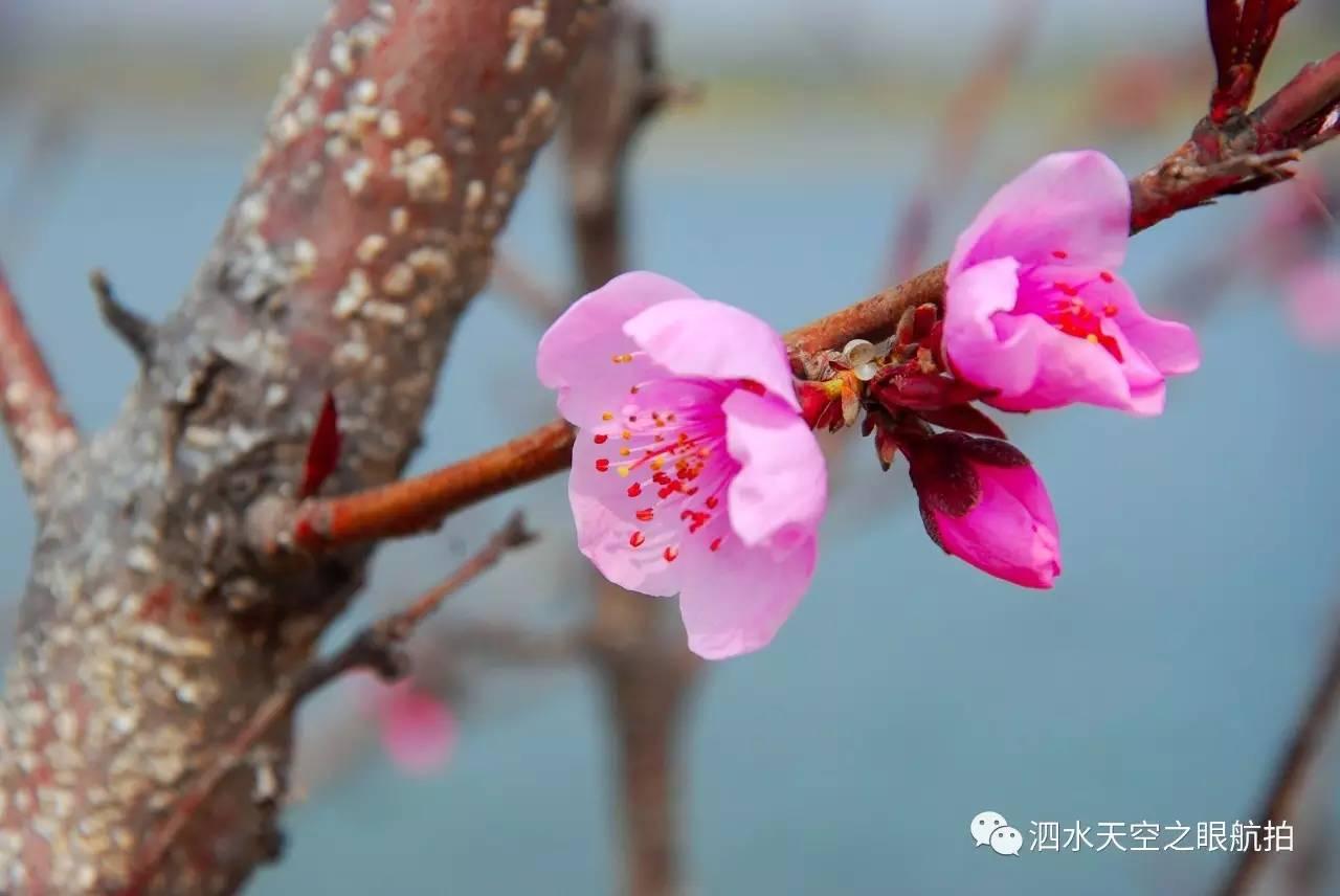 泗水县万人健康跑在洙泗中学盛大举行,各单位