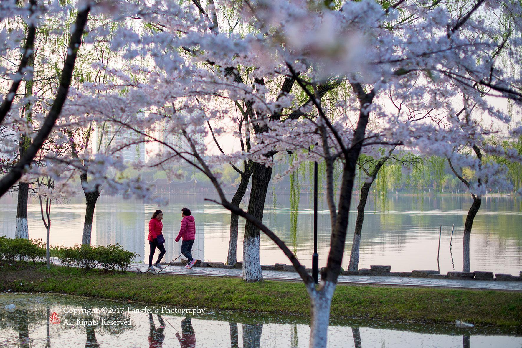 原标题:南京莫愁湖公园,春天的清晨美景如画 春天,总是在不经意间就来到了我们面前。  柳树们垂着头,条条柳枝上长满了又绿又黄的叶子。用手轻抚一下,柔柔软软的,舒服极了。  初升的阳光,三月的翦翦春风拂面,暖暖的撩拨着春心萌动,