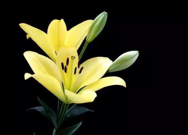 家庭朗读会:林清玄《百合花开》,以花来证明自
