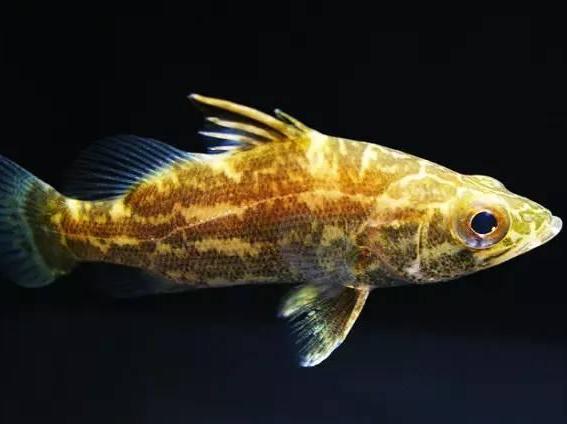 四海钓鱼大讲堂—这些鱼,爱钓鱼的朋友们知道吗