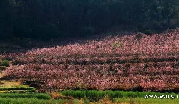 山间小道,远离车水马龙的喧嚣,徐着春风,畅游在雾本彝族村的千亩桃林图片