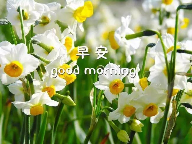 早上好问候语 早上好祝福语加图片图片