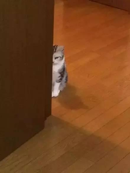 亚洲猫有哪些图片