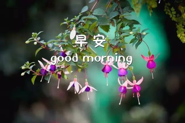 早上好问候语 早上好祝福语加图片