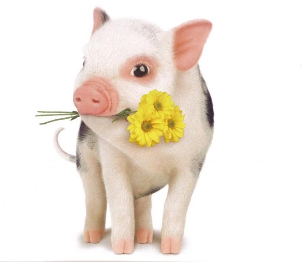 属猪的和什么属相最配_属猪男和什么属相最配