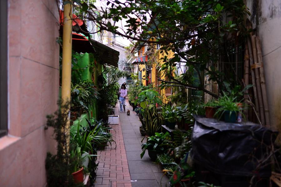 澳门:豪门赌场背后的渔村,觅一份隐匿的美食 - TIM生命过客 - TIM生命过客的博客