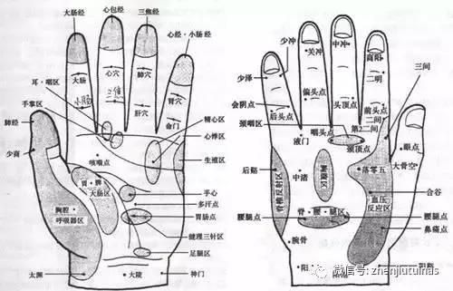 你知道手掌穴位是哪些脏腑的反射区吗