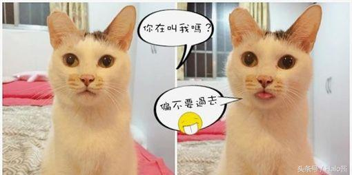 猫咪训练视频图片
