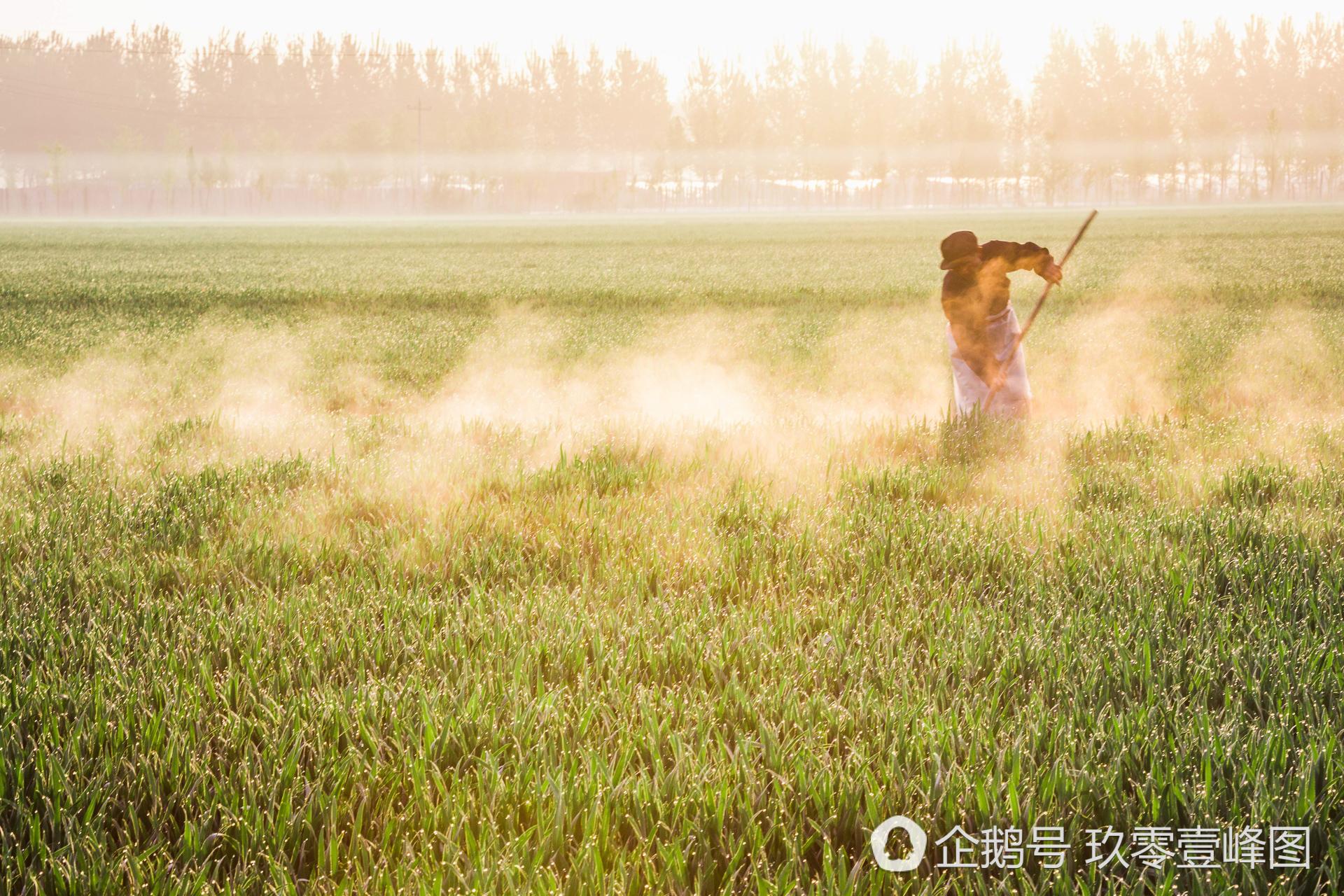 大好河山:晋州周家庄特色梨花节盛装迎客图片