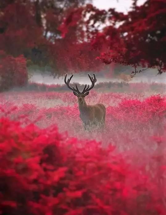 照片~照片~照片~绝美~绝美~绝美 - 满园春色 - 满园春色