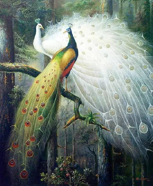 孔雀飞行,千年罕见,真是太美了! - 冰融 - 冰融的博客