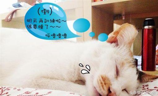 猫咪训练上厕所图片