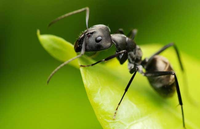 居健康小窍门 被蚂蚁咬了怎么办