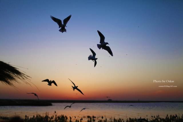 居延海   太阳的光芒已经藏不住要往外钻了,天空的颜色非常漂亮,由于光线还是很暗,所以抓拍飞行中的海鸥真的很难,绝对的技术活,而且我们没有大炮筒,也是难为老公了   居延海   哈哈,太阳终于出来啦,所以看日出的游客但异常的兴奋,快门的声音不绝于耳啊