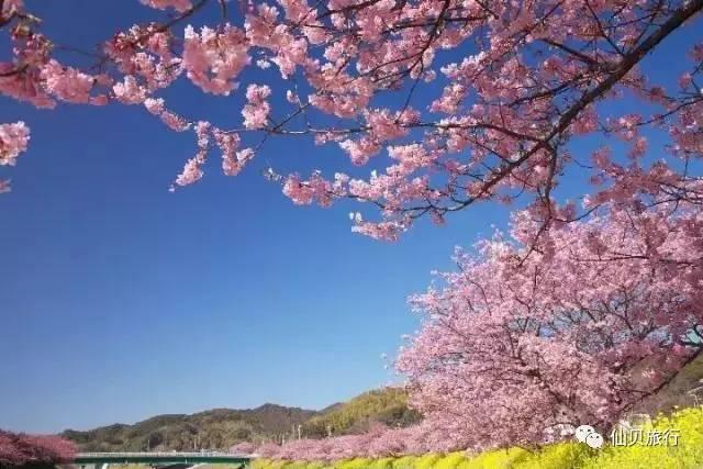 """*图片来自网络   在日本,赏樱被叫做花见,花见(はなみ)起源于平安时代贵族间盛行的""""花宴(はなのえん)"""",可见从前赏樱是皇亲国戚的专属,而到了江户时代商人阶级兴起之后,赏樱逐渐扩展到庶民之中,成为全民性的大型活动."""