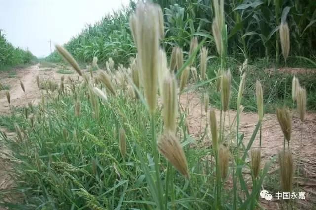 清明踏青,这些常见的野花野草,你都叫得出名字吗