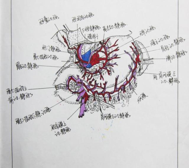 近日,有一组学生手绘人体解剖图刷爆了江大人的微博,朋友圈
