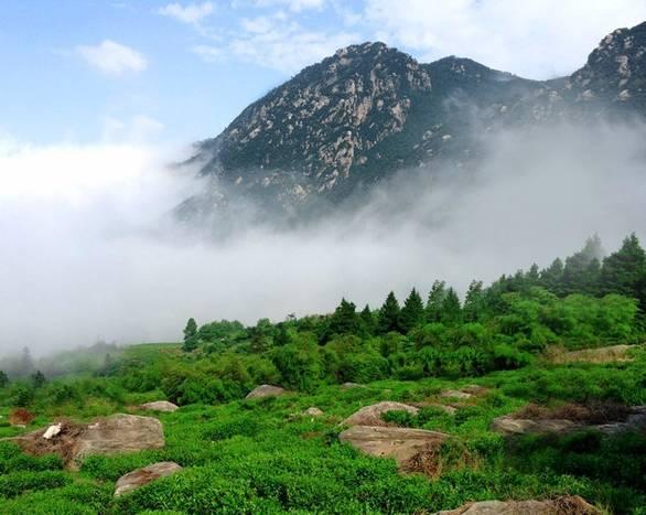 云雾之间,还能欣赏到东林寺,西林寺,东林大峡谷等景点的风韵.图片