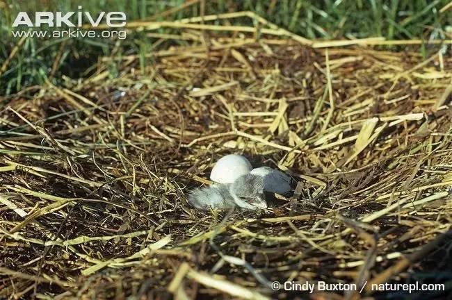 古人、水蛇、食谱的鳄鱼!这真的是一只鸟的食v古人年幼巨蜥的最图片