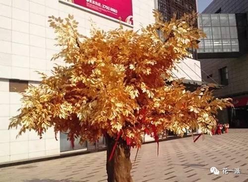 含金树:美国有一种含金量很高的冷杉树。它的根从地下资源中吸收金子,再输送到树皮树叶中去,只要用淘金盘和硫矿槽就可从杉树提取金子。 冷杉树高可40米,小枝淡褐色至灰黄色,沟槽内梳生短毛或无毛,叶端微凹或钝,长1.5-3CM,边缘略翻卷,叶内树脂道边生,球果孢鳞微露出,尖头通常向外反曲。其树干端直,枝叶茂密,可做园林树种。