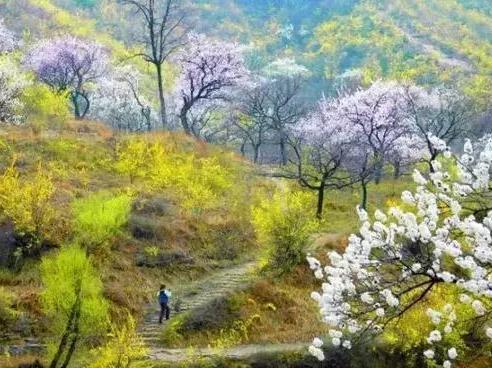 河南林州:人面桃花相映红,大峡谷诱惑到你了吗?