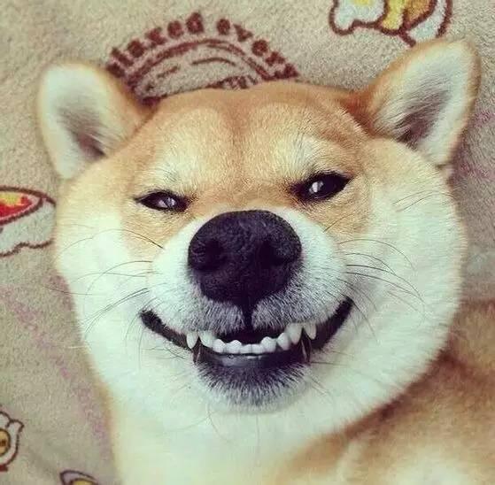 表情都使劲浑身解数,散发出幸福,快乐的味道,也希望它的微笑能永远图片