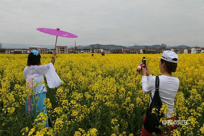 美女组团到汉中看油菜花海  为拍照带帐篷现场更衣 - 视点阿东 - 视点阿东