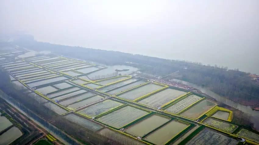洪泽区种植莲藕推进农旅一体化发展