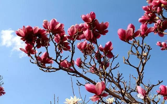 """青春""""是指春天草木茂盛呈青葱色,也是春天的代称了.   《楚辞·大"""
