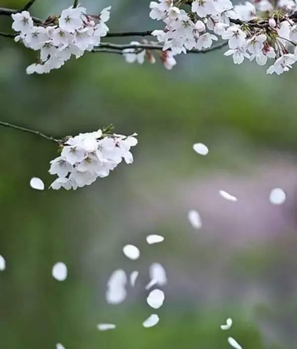 春日游,花下说风流 搜狐