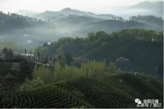 其它 正文  如梦如幻何家寨,活像一副水墨画 采茶是个很美的词汇,它可图片