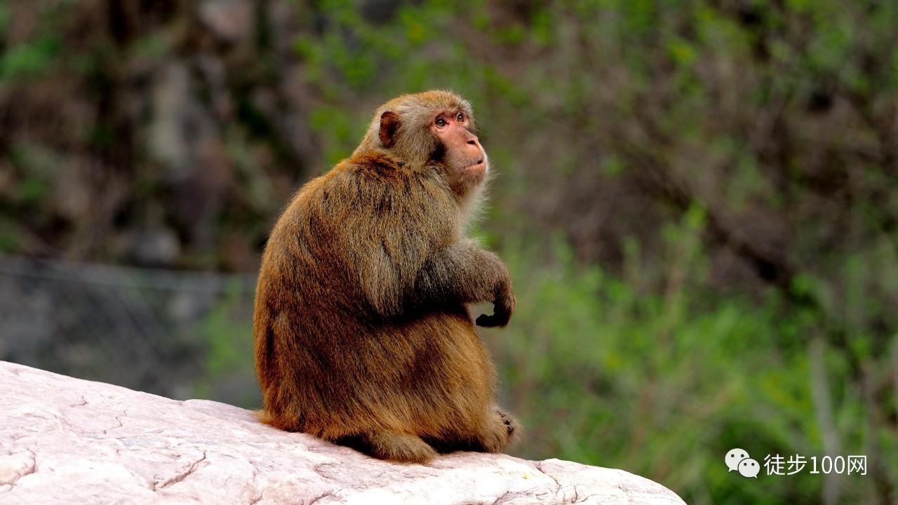 中国猴子最多的景区