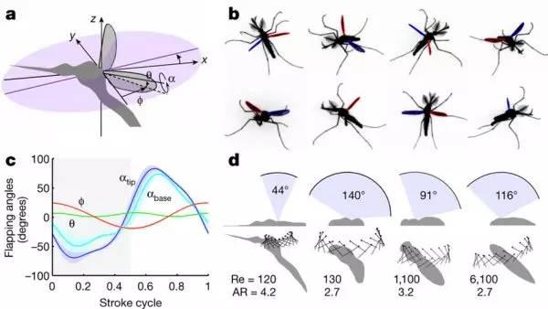 蚊子 绝无仅有的飞行方式