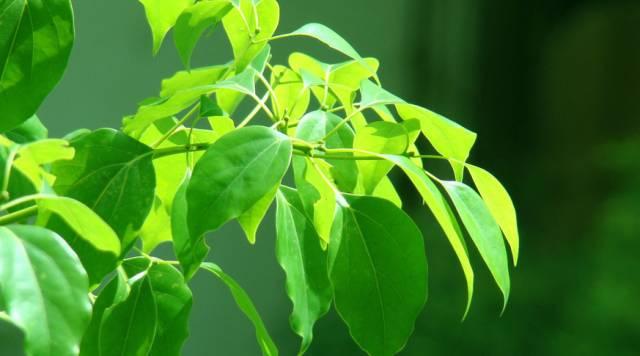 这个周六,来杭州植物园破解树叶密码图片