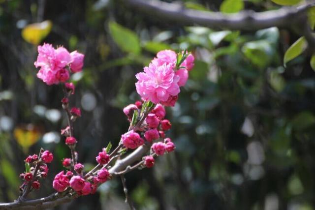 旅游 正文  其他地点:百花苑,平度植物园,胶州公园,黄岛双珠公园,莱西