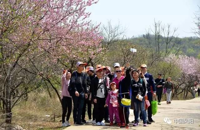 游人如织,络绎不绝,穿过迷谷山顶,前往狼巷的桃林小道,赏花拍照图片